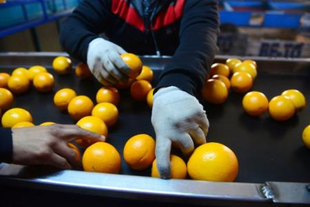 Pidieron regionalizar la exportación de cítricos tras la decisión de la Unión Europea