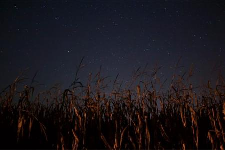 Nuevamente denunciaron una furtiva fumigada nocturna en el Sexto Distrito del Departamento Gualeguay.