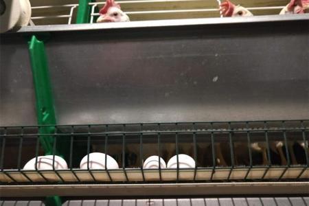La demanda de huevos a nivel nacional se incrementó en un promedio del 40 por ciento desde el inicio de la cuarentena, pero las ganancias se las lleva el intermediario, no el productor.