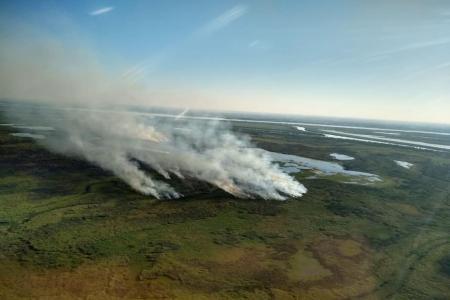 Reportaron focos activos en Entre Ríos, Chubut, Buenos Aires y Misiones