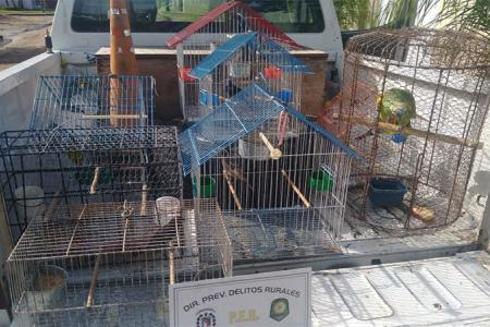 pájaros secuestrados