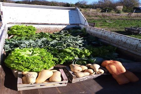 verduras Parque Hortícola