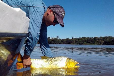 Hasta el 31 de diciembre rige el período de veda para la pesca de dorados en la provincia.