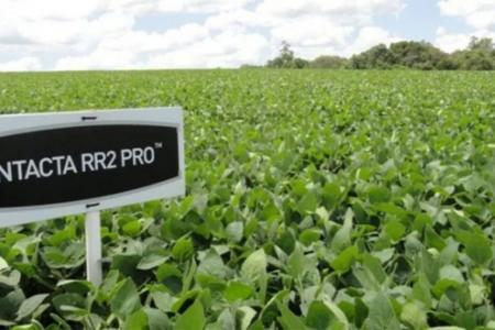 Bayer deja el negocio de semillas de soja en la Argentina.