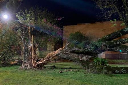 árboles caídos en Basavilbaso