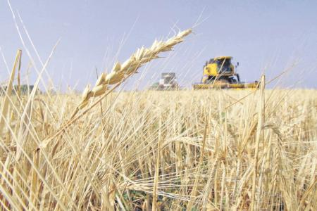 En la campaña 19/20 creció el área sembrada en la provincia pero cayó la producción