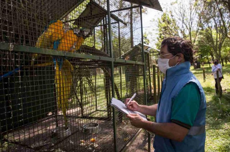 Aclararon que los animales silvestres rescatados murieron pese a su atención