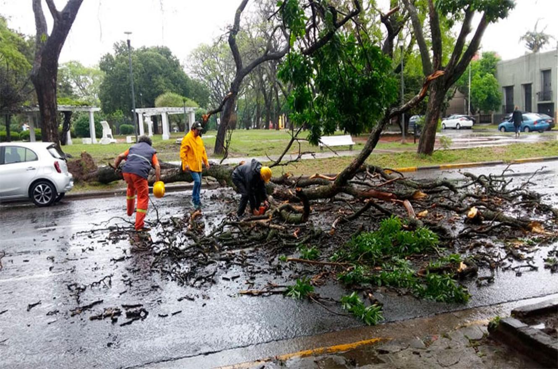 árbol caído en calle Carbó