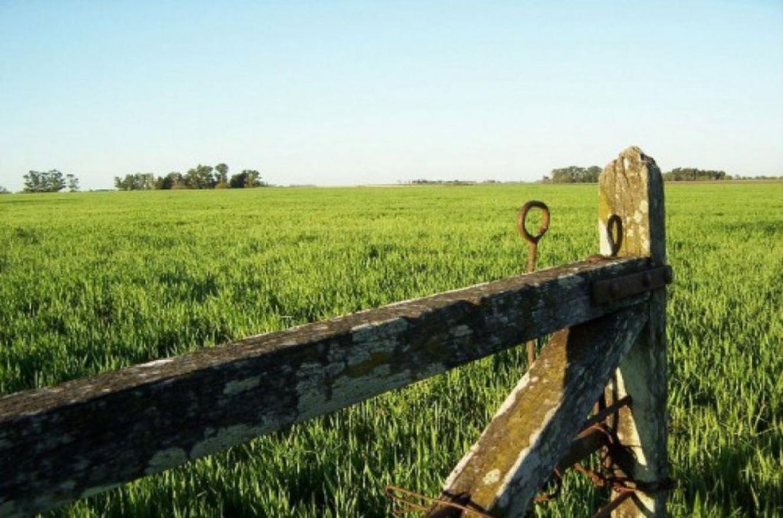 Sector agropecuario.