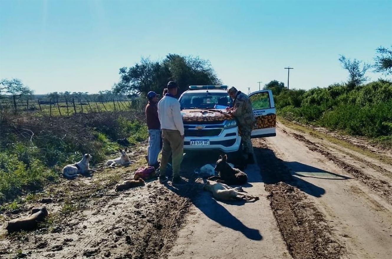 La caza furtiva está haciendo estragos en los campos de la zona Sur de la provincia.
