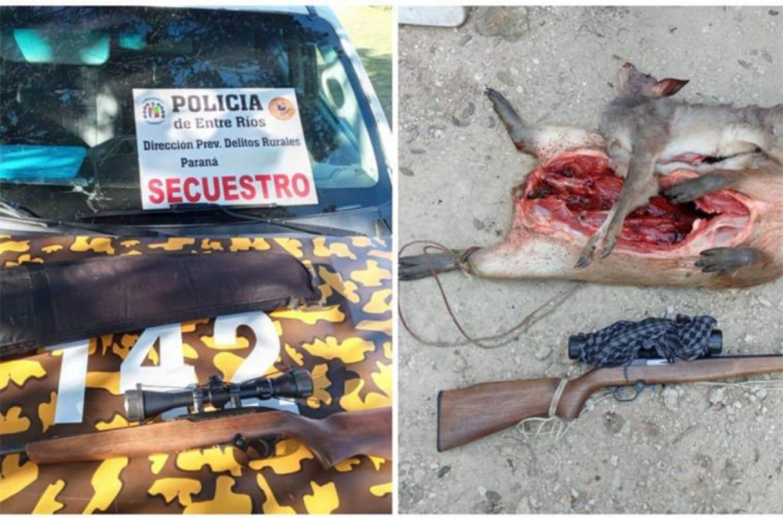 La corzuela parda o guazuncho es Monumento Natural de Entre Ríos y su caza está prohibida.