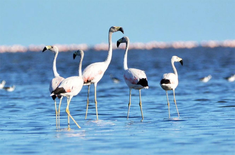 Flamencos en la laguna de Mar Chiquita o Mar de Ansenuza, al noreste de Córdoba.
