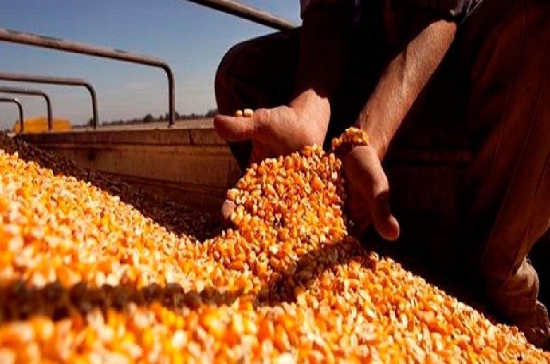 La diputada Fregonese pidió informes por el cierre de exportaciones de maíz