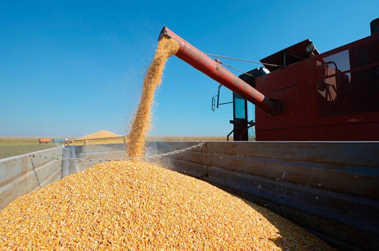 El gobierno suspendió las exportaciones de maíz y hay incertidumbre entre los productores