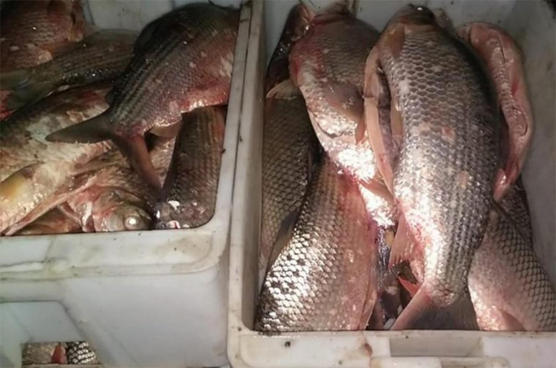 En la carta se pide que se suspenda este año las autorizaciones para la exportación de pescado de agua dulce, que se extrae en mayor parte en la cuenca del río Paraná, siendo la especie sábalo la más explotada.