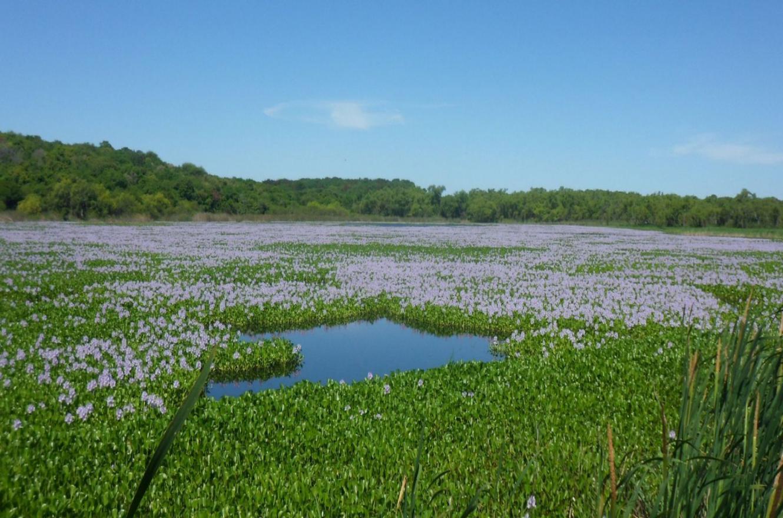 El Pre Delta es un Parque Nacional y sitio RAMSAR