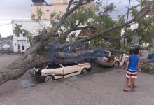 Un árbol aplastó dos autos en la costanera de Gualeguaychú