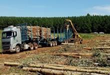 Transporte forestal