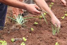 La Unión de los Trabajadores de la Tierra presentó una propuesta para producir cultivos extensivos de cereales, oleaginosas y granos alimenticios agroecológicos en zonas lindantes a escuelas rurales de Entre Ríos.