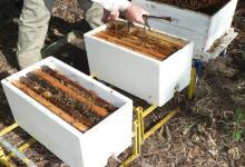La resolución abarca a la producción de abejas