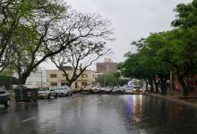 árbol caído calle Carbó (Foto: ANALISIS)
