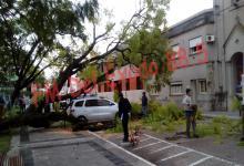 árbol caído en Nogoyá