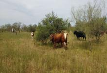 área natural protegida