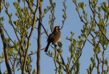 Taller de Sonidos de aves