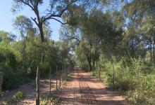 En los últimos 20 años, se perdieron 6,5 millones de hectáreas de bosque nativo en el país
