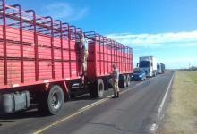 Detuvieron la marcha de cuatro camiones que trasladaban bovinos con garrapatas