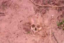 restos óseos Diamante