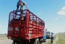 En uno de los controles se detectó que se transportaban caballos sin la debida documentación.