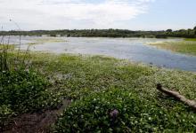 humedales del Paraná