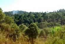 """""""Los mejores guardianes de los bosques"""", así definió la FAO a los pueblos indígenas de América Latina."""