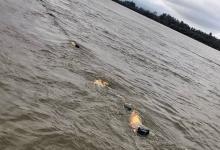 En plena veda, aparecieron mallas repletas de dorados en el río Uruguay