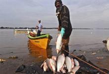 El Paraná sigue en bajante extrema y ya van tres ciclos seguidos de escasa reproducción de peces. A ello se le suman, hacia el sur, las quemas del Humedal: quedan sin comida, refugio ni energías para reproducirse. Investigadores lanzaron llamado urgente a las provincias costeras.