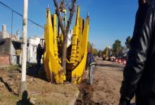 árboles Racedo traslado
