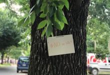 La Justicia frenó la tala de árboles en el ensanche del bulevar Racedo de Paraná (la imagen es de Johanna Peltzer para 170 Escalones y fue extraída del portal Era Verde).