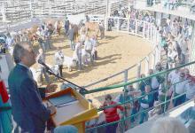 Hoy quedará formalmente inaugurada la Expo Rural de Gualeguaychú. Se espera la presencia del ministro de Agricultura, Ganadería y Pesca de la Nación Luis Miguel Etchevehere.