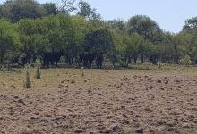 sequía campo