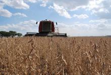La soja volvió a subir y su precio es el más alto de los últimos cuatro años