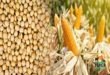 granos soja y maíz