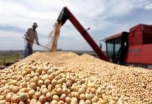 La soja cayó 6,4% en Chicago y quedó a un paso de perforar los u$s500
