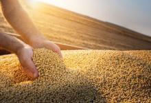 El precio internacional de la soja subió casi USD 20 en un día