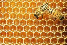 Conformaron una nueva red de apicultores entrerrianos para exportar miel